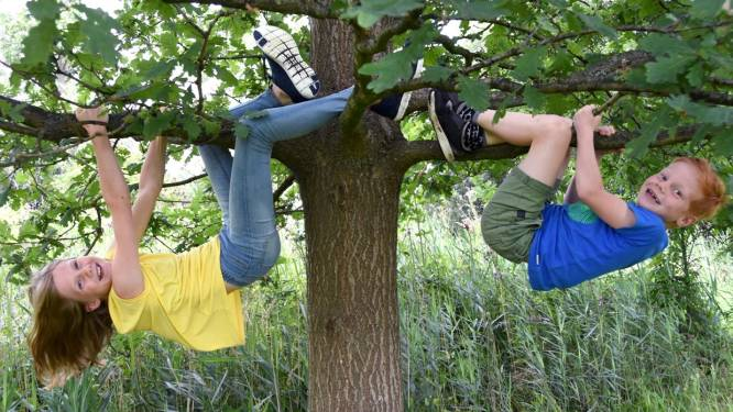 Inwoners uit Geel, Balen, Beerse en Kasterlee kunnen gratis boom bestellen dankzij '1.001 bomen'-actie