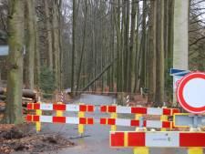 Boom waait om en blokkeert weg in De Steeg