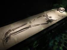 Dankzij dit skelet begint de geschiedenis van Nederland vanaf nu in Swifterbant: 'Het blaast onwetenden zo omver'