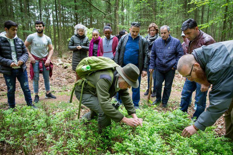 Inburgeraars zoeken met boswachter Monique Zondag in het Speulderbos naar bosbessen. Beeld Herman Engbers