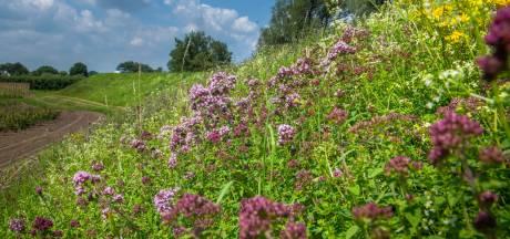 Maaien in etappes voor een zomer lang bloemen op de dijk