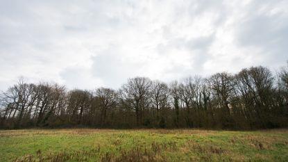 """Kauwendaal officieel erkend als natuurreservaat: """"Gebied laten uitgroeien tot aantrekkelijke groene long"""""""