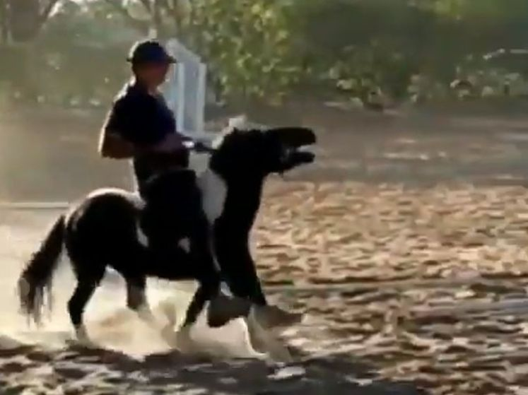 Olympische dressuurruiter drie jaar geschorst na mishandeling van pony
