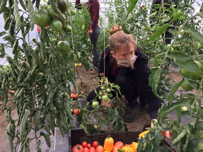 La formation de maraîchage bio est le fruit d'une collaboration entre la Ville de Charleroi et le Forem