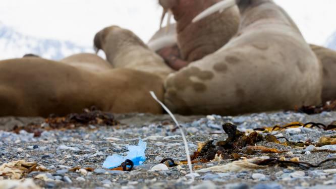 'Flessenpost' met afval laat zien waar afvoerputje van Europa zit