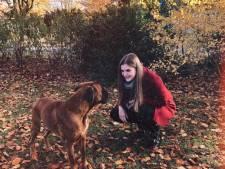 Hondenbelasting in Oisterwijk dan toch exit? PrO wrijft zich al in de handen