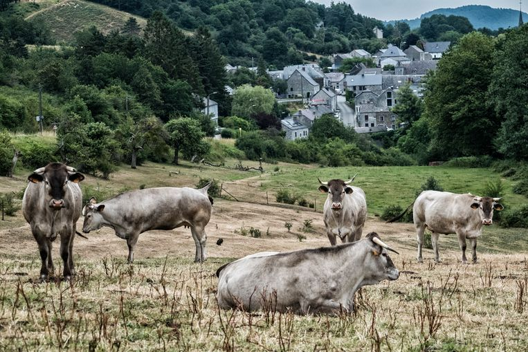 Zicht op het dorpje Vierves-sur-Viroin. Deze streek lijkt onaangetast door de tijd. Beeld Tim Dirven