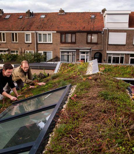 Natuur en Milieufederatie Utrecht wil inwoners stimuleren hun daken te vergroenen