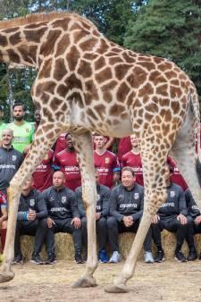 Burgers' Zoo langer sponsor van Vitesse
