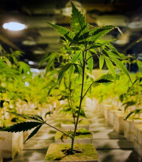 Wietplantage in bedrijfspand in Dordrecht aangetroffen, burgemeester sluit de boel
