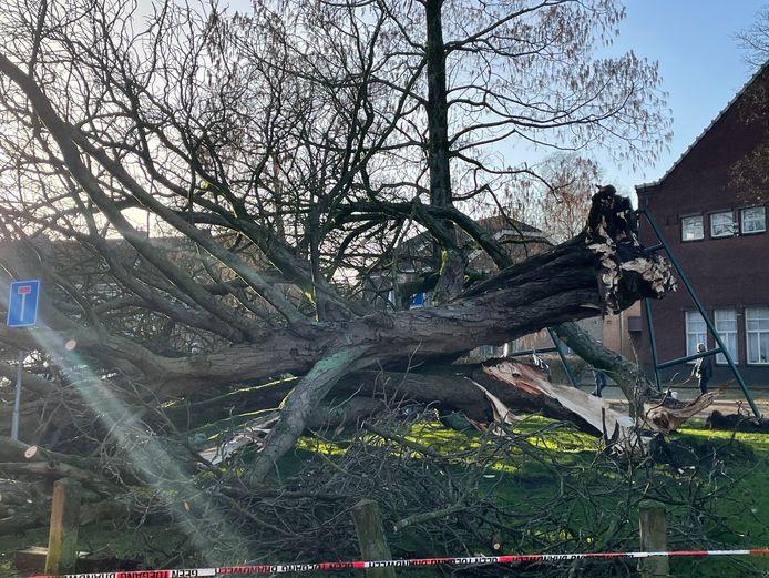 De boom is volledig verwoest door de harde rukwinden.