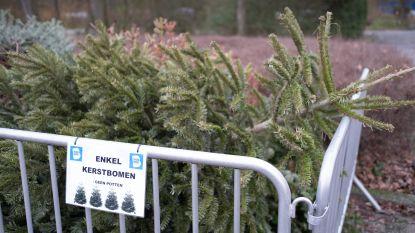 Kerstbomen worden ingezameld voor verbranding