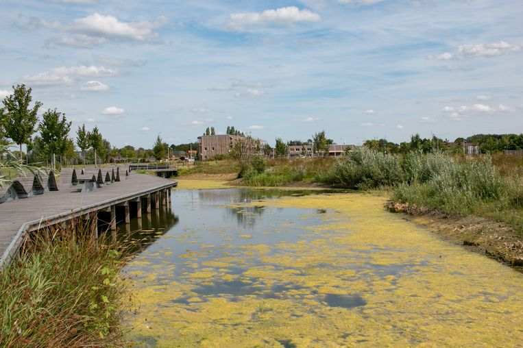 Een kwart van de oppervlakte van de nieuwe Clementwijk bestaat uit parkgebied, met veel water en groen.