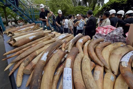 De Thaise overheid neemt regelmatig gesmokkeld ivoor in beslag