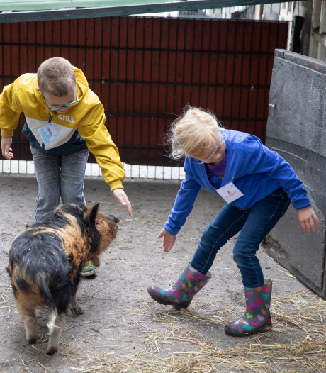 Cursus dierverzorging in Geldrop: Gewillig laat geit Harriet haar sik borstelen