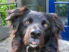 'Baasjes willen best betalen als hun huisdier kanker heeft'