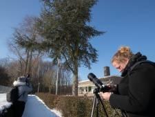 Boom met ransuilen trekt veel bekijks in Dronten: 'Prachtig om van dichtbij te zien'