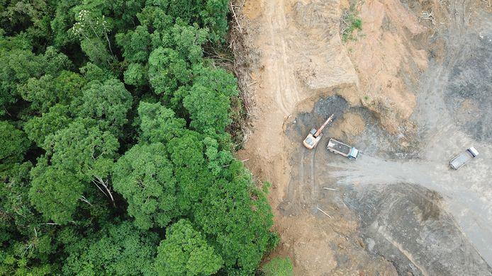 Ontbossing in Borneo, gezien vanuit de lucht.