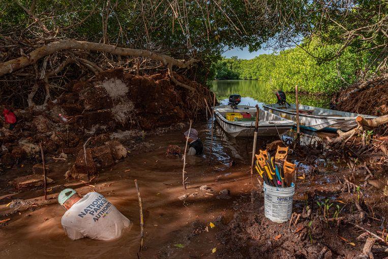 Vrijwilligers aan het werk. Het kan weken duren om een nieuwe doorgang te maken, zodat het water weer het mangrovesysteem binnen kan stromen. Beeld Lorenzo Mittiga/INSTITUTE