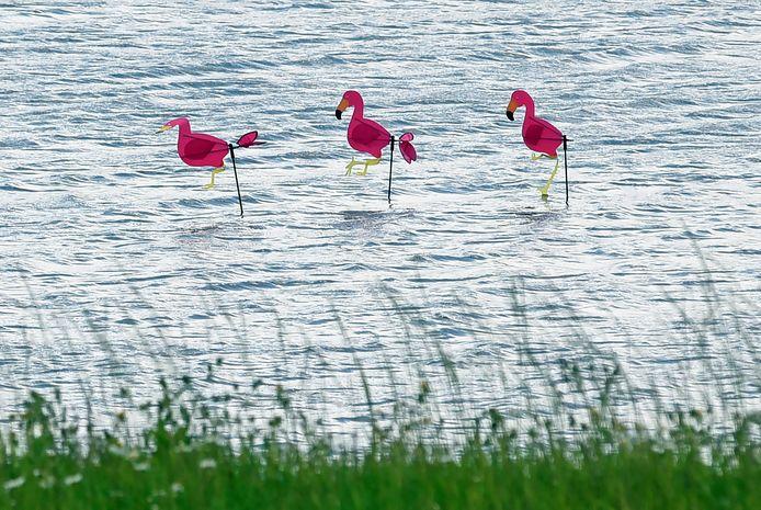 Van dichtbij is goed te zien dat de roze watervogels niet echt zijn.