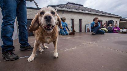 "Ben Weyts stelt GAIA en dierenasiel Sint-Truiden gerust: ""Dierenasielen kunnen hun activiteiten verderzetten"""