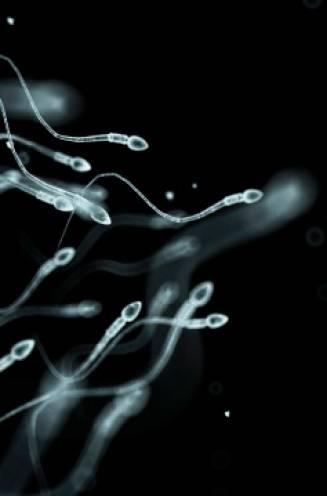 """""""Mens is bedreigde diersoort"""": dalende spermakwaliteit bedreigt ons voortbestaan, zegt Amerikaans wetenschapper. Maar is dat ook zo?"""