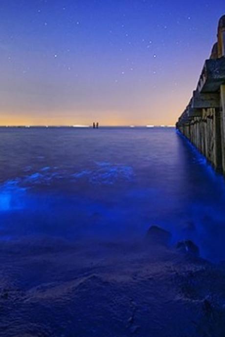 Zeevonk licht vloedlijn op bij Westkapelle