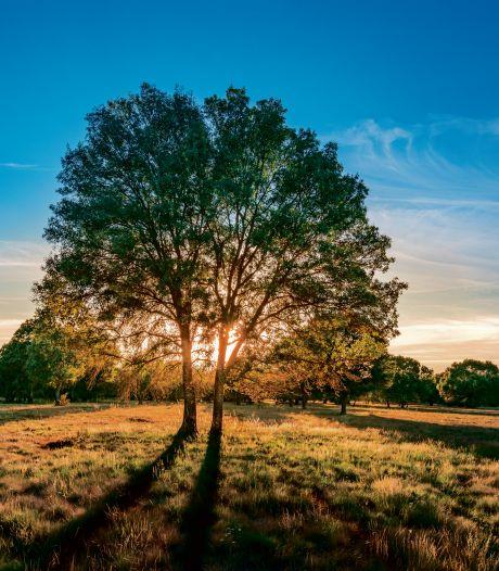 Raad Waalre akkoord met plan voor landgoed met villa's en natuur aan Gildebosweg