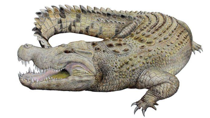 Zo zou de uitgestorven krokodil er uitgezien hebben.