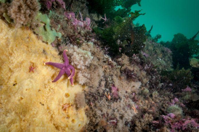 Beeld ter illustratie. In de versteende resten van een 860 miljoen jaar oud rif in het noordwesten van Canada vonden wetenschappers structeren die erg lijken op de skeletten van moderne zeesponsen.