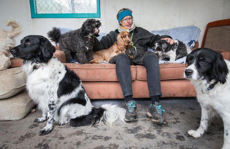 'Veel honden staan klaar achter de voordeur, andere moet je even zoeken.' Beeld Dingena Mol