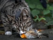 Stichting Huiskat Thuiskat stapt naar de rechter: 'Katten moeten binnen blijven'