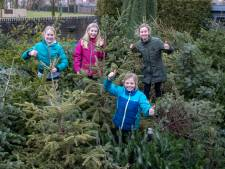 Meer dan 150 kerstbomen in de achtertuin: 'Vorig jaar zijn ze van de opbrengst gaan trampolinespringen'
