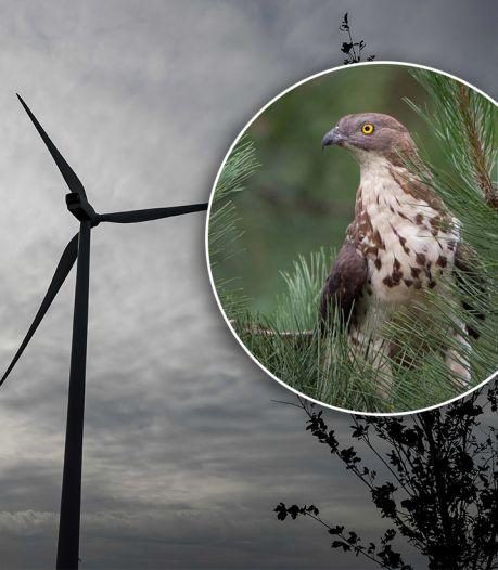 Wespendief blijkt niet te tellen: nieuwe tegenslag voor komst windmolens op de Veluwe
