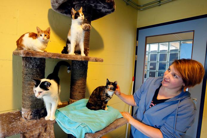Een deel van de katten, hier met medewerkster Sabrina van het dierenasiel in Gorinchem. Daar werden 17 van de 44 katten nu tijdelijk opgevangen. De rest werd in Nieuw-Lekkerland en Deil ondergebracht in afwachting van nieuwe baasjes.