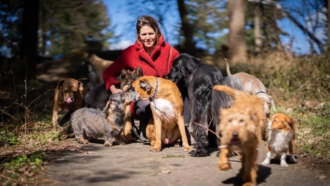 Er kan geen hond meer bij in de bus van Nicole: topdrukte bij Arnhemse hondenuitlaatservices