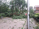 Lezer Raymon van Vught maakte deze foto van een gevelde boom aan de Oude Graafseweg.