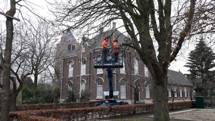 De oude kastanjeboom in hart van Geffen werd eerst 'uitgekleed' en daarna omgezaagd. Op de achtergrond de pastorie en Maria Magdalenakerk.