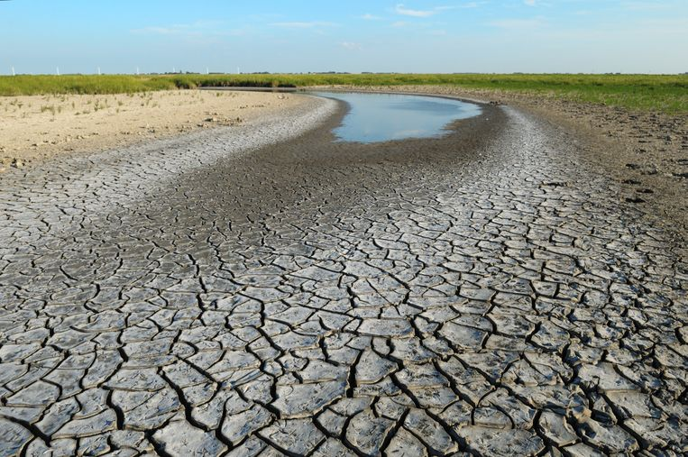 Een drooggevallen kreek in het natuurgebied Fryslân Bûtendyk. Beeld Dico de Klein en Hendrik van Kampen
