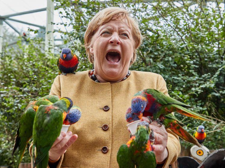 Angela Merkel schreeuwt het uit bij vogelbezoek