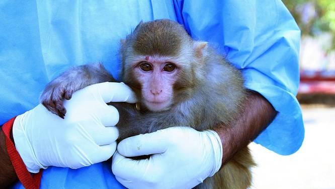 Van fruitvliegje tot chimpansee: deze dieren hebben een astronautendiploma