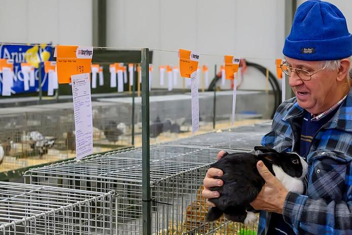15-11-2019 - Oud Gastel- Foto: Pix4Profs/Peter Braakmann - Kleindierenclub Konijnenvriend is al lang zo groot niet meer, maar maakt vandaag toch de 100 jaar vol. Daarmee de oudste vereniging in Gastel.