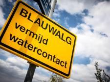 Blauwalg bederft zwempret bij plas Hof van Capelle in Sprang-Capelle