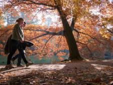 Nederland heeft er een nieuwe coronahobby bij: wandelen