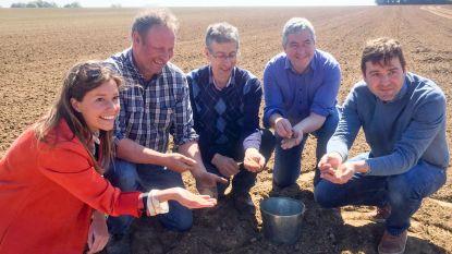 Eindelijk: opnieuw échte Belgische mosterd
