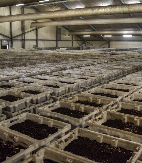 Wormkweker Almkerk heeft altijd 25.000 kilo wormen op voorraad, maar wil er nog meer kunnen kweken