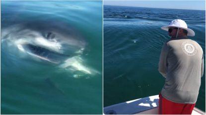 """""""Holy shit!"""": witte haai snoept vangst van visser af dicht bij plaats waar dag eerder fatale aanval plaatsvond"""
