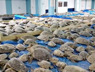 Duizenden schildpadden gered uit vrieskou Texas
