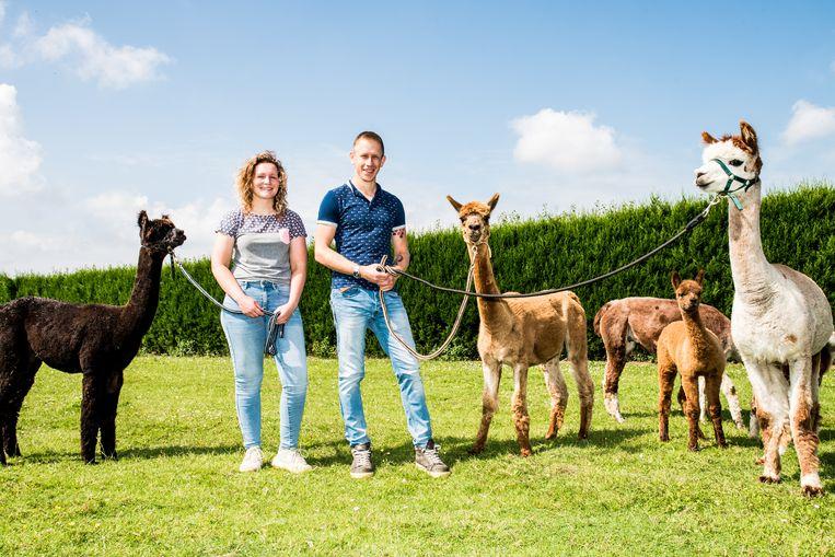 Alpaca's van Esmee Rienstra en Jeffrey de Pauw. Beeld Jan Mulders