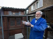 Bouw nieuw clubhuis duivenmelkers is race tegen de klok: eerste wedstrijdvluchten al in april